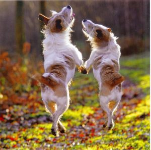 dancing-dogs-jpg-jpeg